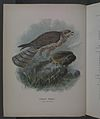History of the birds of NZ 1st ed p010-2.jpg