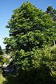Hohenburg - Oberpfalz 036.JPG