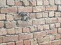 Hole in the wall of squirrel.jpg