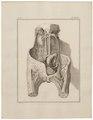 Homo sapiens - ingewanden - 1700-1880 - Print - Iconographia Zoologica - Special Collections University of Amsterdam - UBA01 IZ19600107.tif