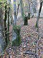Horn-Bad Meinberg - 2015-11-01 - alte B1 (03).jpg