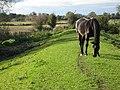 Horse on The Stank - geograph.org.uk - 1011039.jpg