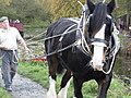 Horse power on the Cromford Canal - geograph.org.uk - 1586940.jpg