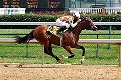 Horseracing Churchill Downs.jpg