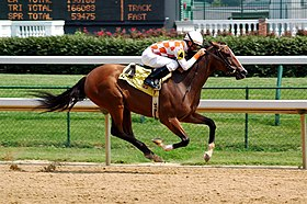 Un Pur-sang en course de galop à l'hippodrome de Churchill Downs