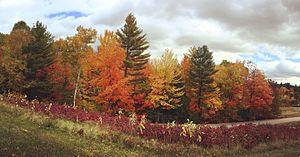 Gene Likens -  Hubbard Brook Experimental Forest, 2015