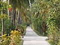 Hudhuranfushi - panoramio - Kaz Ish (8).jpg