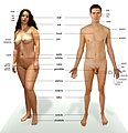 Human anatomy cs.jpg