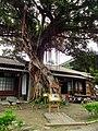 Husband-Wife Tree 夫妻樹 - panoramio.jpg