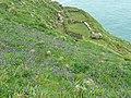 Hut foundations, Tintagel Island - geograph.org.uk - 1385439.jpg