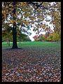 Hyde Park - panoramio (4).jpg