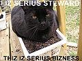 I IZ SERIUS STEWARD lolcat.jpg