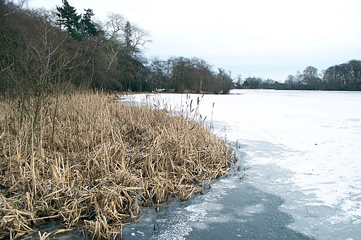 Ice on Bolam Lake - geograph.org.uk - 1712365
