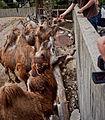 Igualdad Animal - 2383 (6992950666).jpg