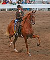 Images from the 2009 Shelbyville Horse show (3802833280).jpg