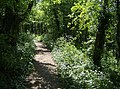 In woods on the Macmillan Way - geograph.org.uk - 440630.jpg