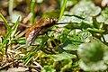 Insekt (41450181085).jpg