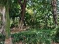 Inside Tunduru Gardens in Maputo.jpg