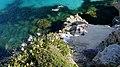 Isole egadi sicily boboviel favignana marettimo levanzo (53).jpg