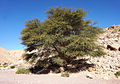 Israel - tree.jpg