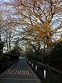 Ivy Lane at Dawn - geograph.org.uk - 713983.jpg