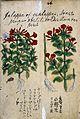 Japanese Herbal, 17th century Wellcome L0030084.jpg