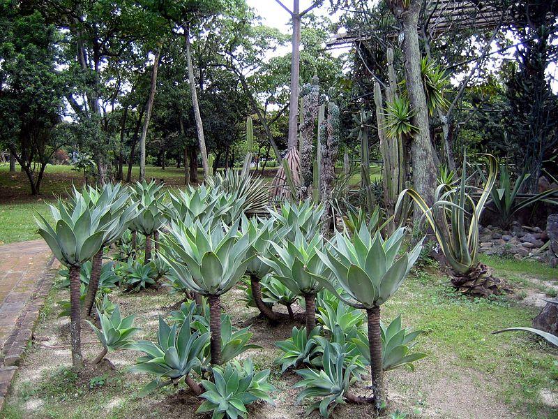 File jardin botanico plantas medell - Planta de jardin ...