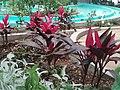 Jardin botanico de Kuautitlan Izcalli. - panoramio.jpg