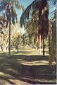 Jardin de Pamplemousses (3000879909).jpg