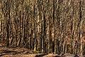 Jasmund, 1804061035, ako.jpg