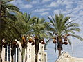 Jerusalem P1100764 (5149683120).jpg