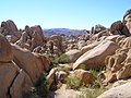 Joshua Tree National Park - panoramio (12).jpg