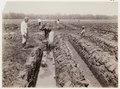 KITLV - 30199 - Kurkdjian, N.V. Photografisch Atelier - Soerabaja - Sugar company in East Java - 1921.tif
