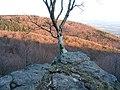 Kaľamárka - vyhliadková skala - panoramio.jpg