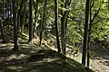 Kaali crater - panoramio.jpg