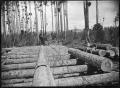 Kahikatea logs on the skids at Christie's Bush, near Christie's Mill, Hikurangi ATLIB 287659.png