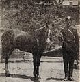 Karabakh stallion Yermakovs photo.jpg