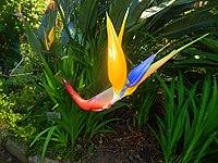 Kirstenbosch National Botanical Garden by ArmAg (6).jpg
