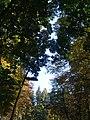 Klaffende Luecke im Frankfurter Waldpark.jpg