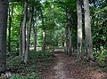 Klein-Glienicke Park Buchen Böttcherberg.jpg
