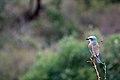 Kruger National Park, South Africa (34198065693).jpg