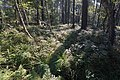 LSG Forst Rundshorn nahe Würmseeweg IMG 9884.jpg