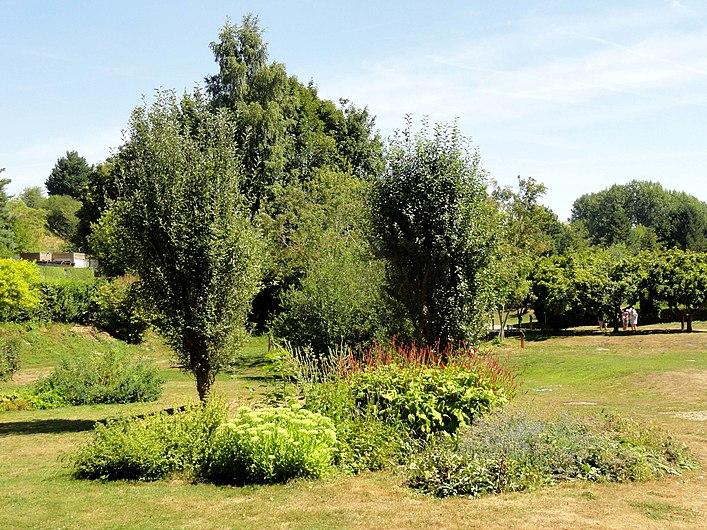 La Chaussée-Tirancourt (80), parc Samara, près du labyrinthe végétal.jpg