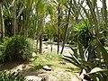 La palmeraie de elche - panoramio (26).jpg