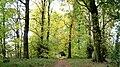 Lady Spencer's Walk - geograph.org.uk - 335829.jpg