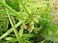 Ladybird (27501440943).jpg