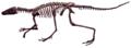 Lagosuchus Talampayensis white background.png