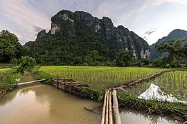 Landscape with mountains, green paddy fields and bamboo footbridge, in the evening, in Vang Vieng.jpg