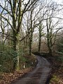 Lane in Howard Copse - geograph.org.uk - 1772286.jpg