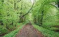 Langes Tannen Waldweg 06.jpg